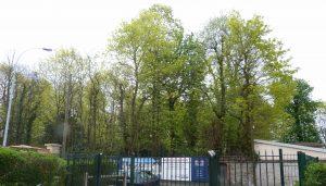 arbres Michot